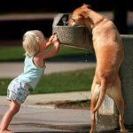 dog getting a drink from a water fountain