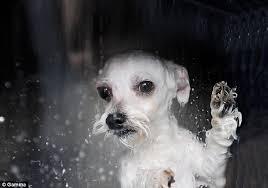 dog, a terrier
