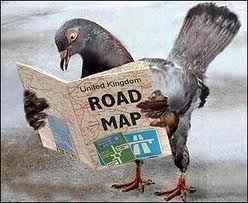 Homing pigeon who is lost
