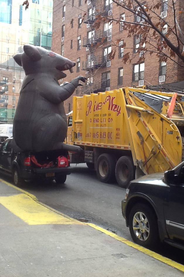 Rat and NY city sanitation department truck