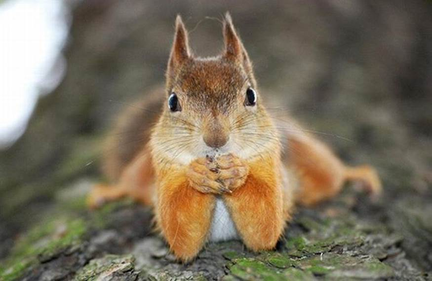 Squirrel taking a serfie of herself.
