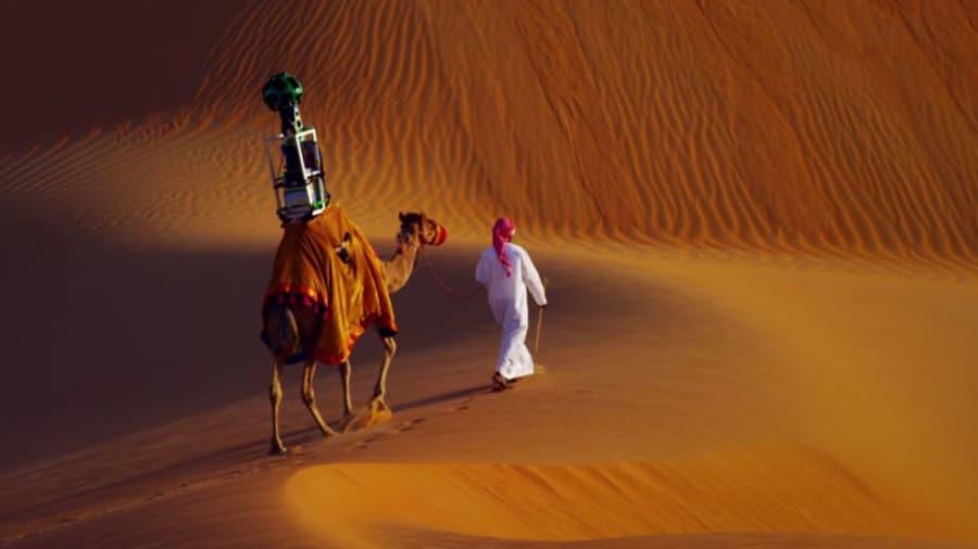 Google Employee, a camel named Rafia